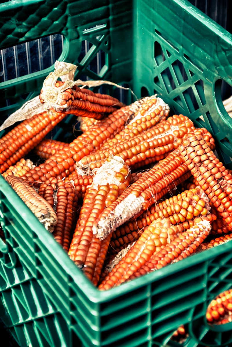 corn in basket 01.jpg